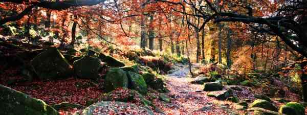 Padley Gorge (Shutterstock)