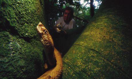 Snake Island, Brazil (Mark Moffett/Minden Pictures)