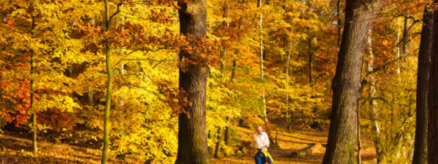 Enjoy the fresh air in woodland surrounding Schlachtensee (Flick: Pedro Szekely)