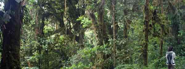 Explore Costa Rica's mystical and exotic jungles (Flickr: Ben Kucinski)
