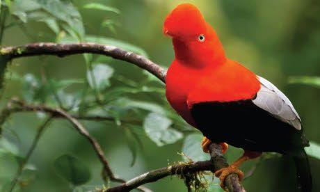 Bird-watching ticklist