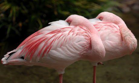 Birdwatching ticklist