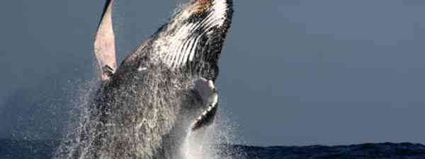 Whale watching is a life-changing travel experience (dreamstime)