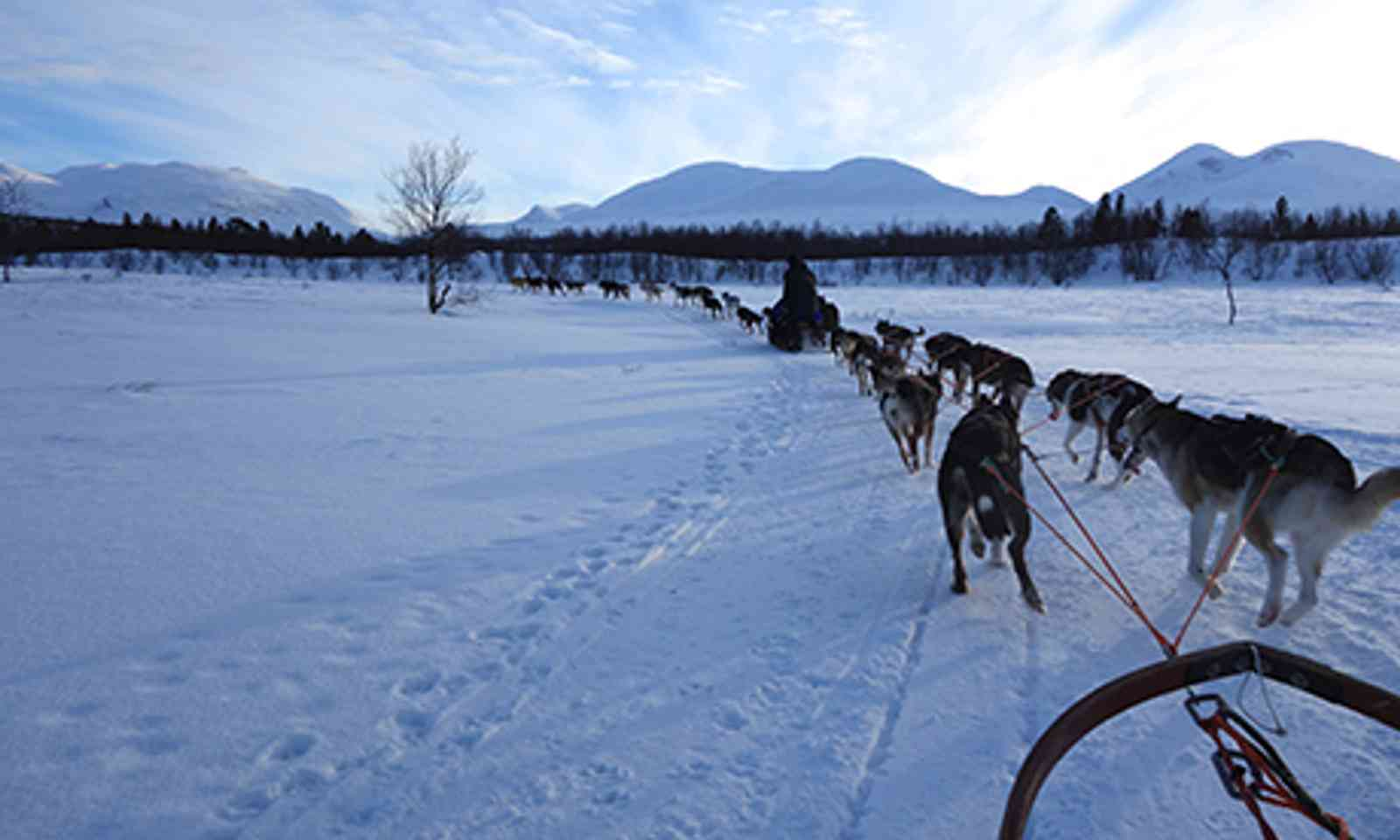 Dog Sled (Peter Moore)