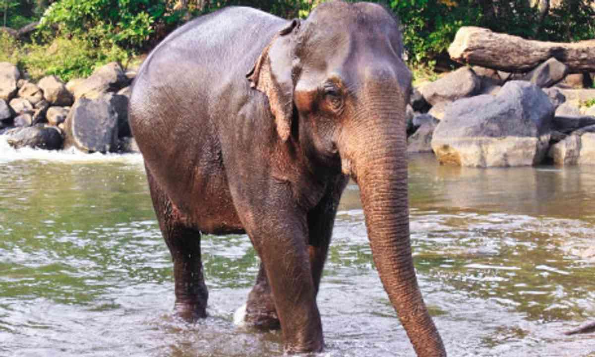 An Elephant in Laos