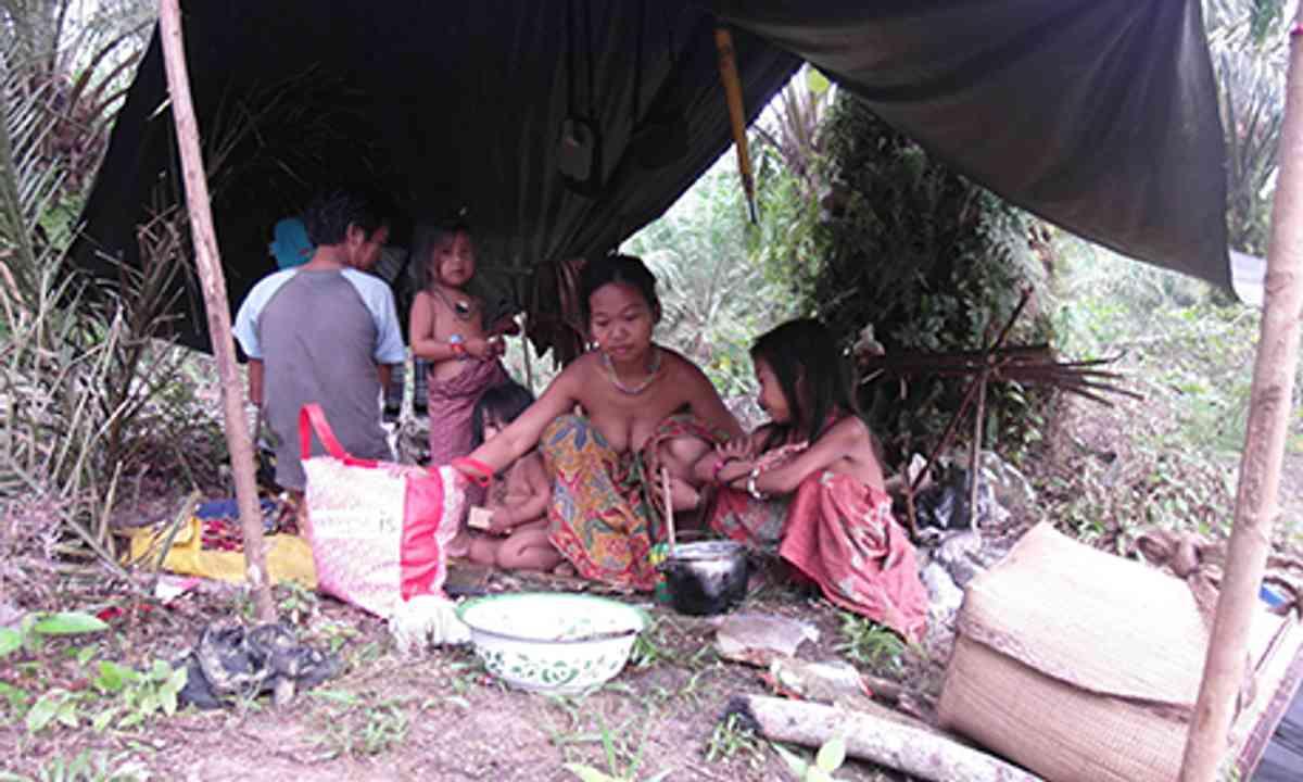Forest nomads (Elizabeth Pisani)