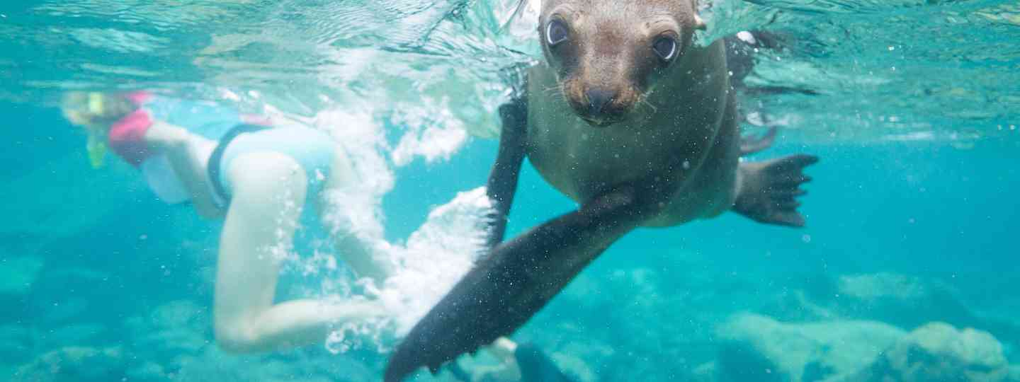 Snorkelling with sea lions (Shutterstock)