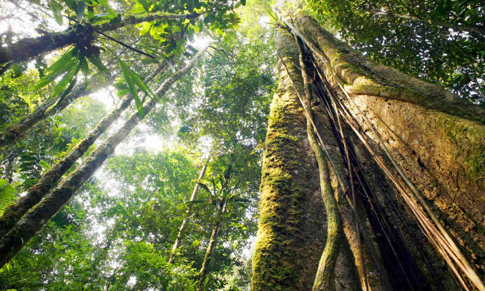 Rainforest, Ecuador (Shutterstock)