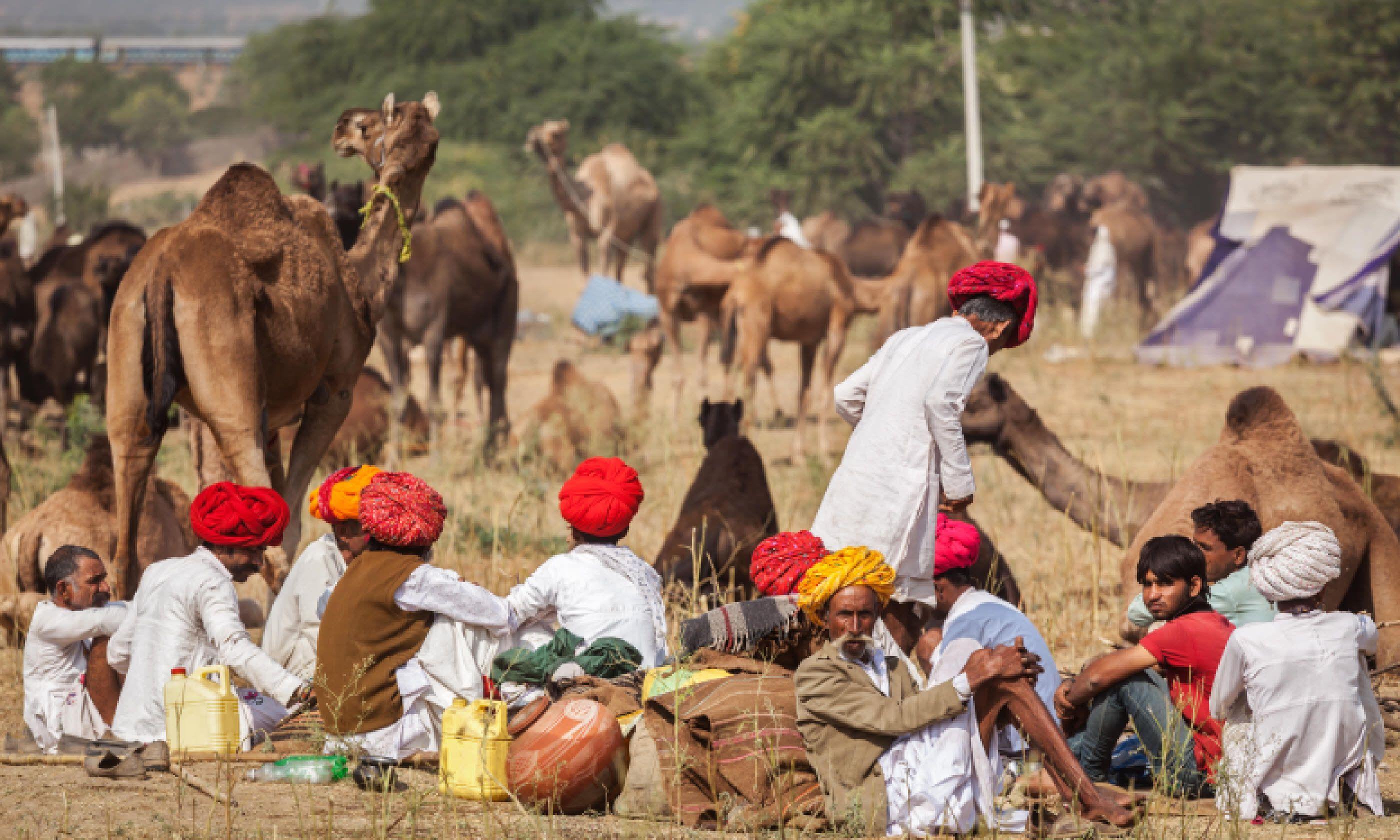 Pushkar Camel Fair (Shutterstock)