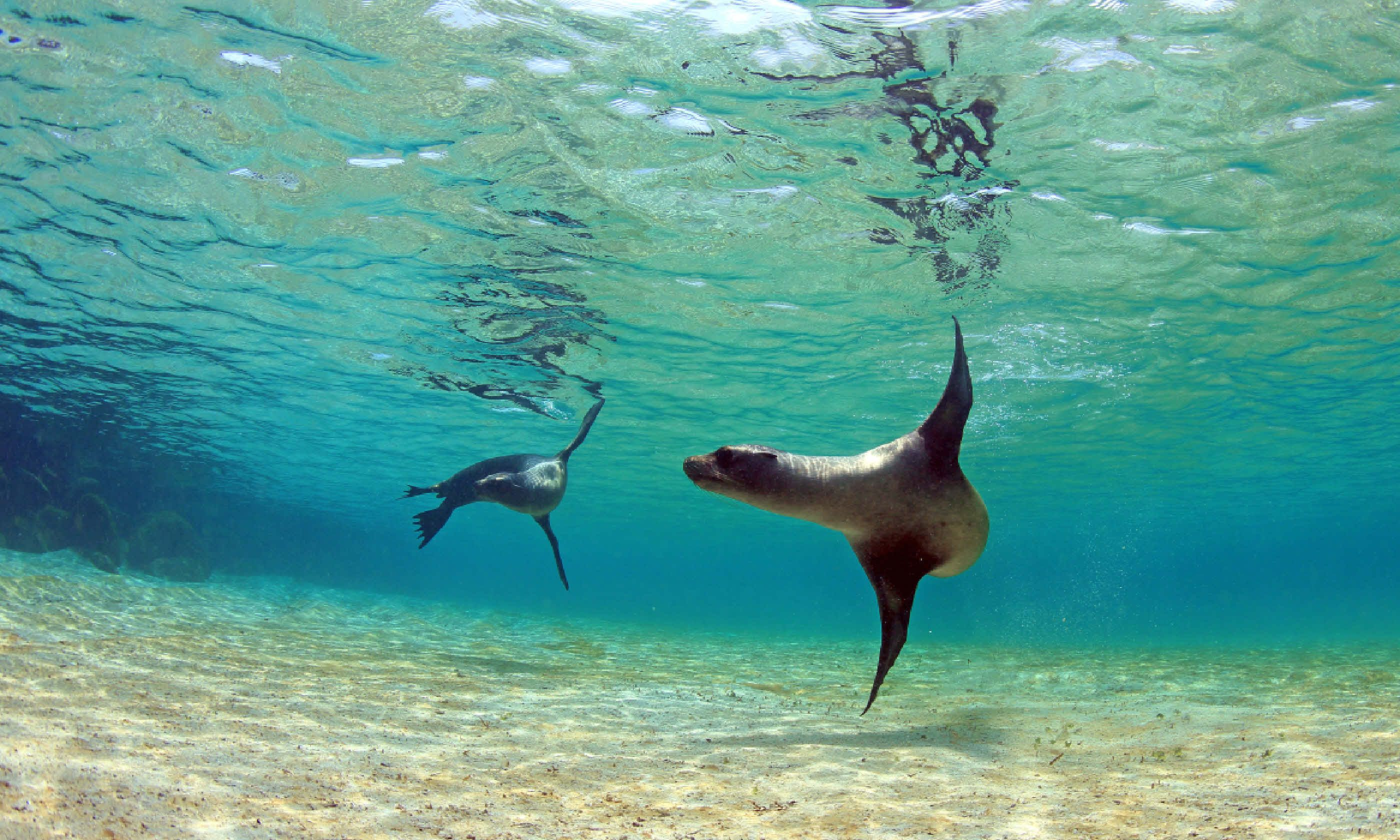 Sea lions in Galápagos Islands (Shutterstock)