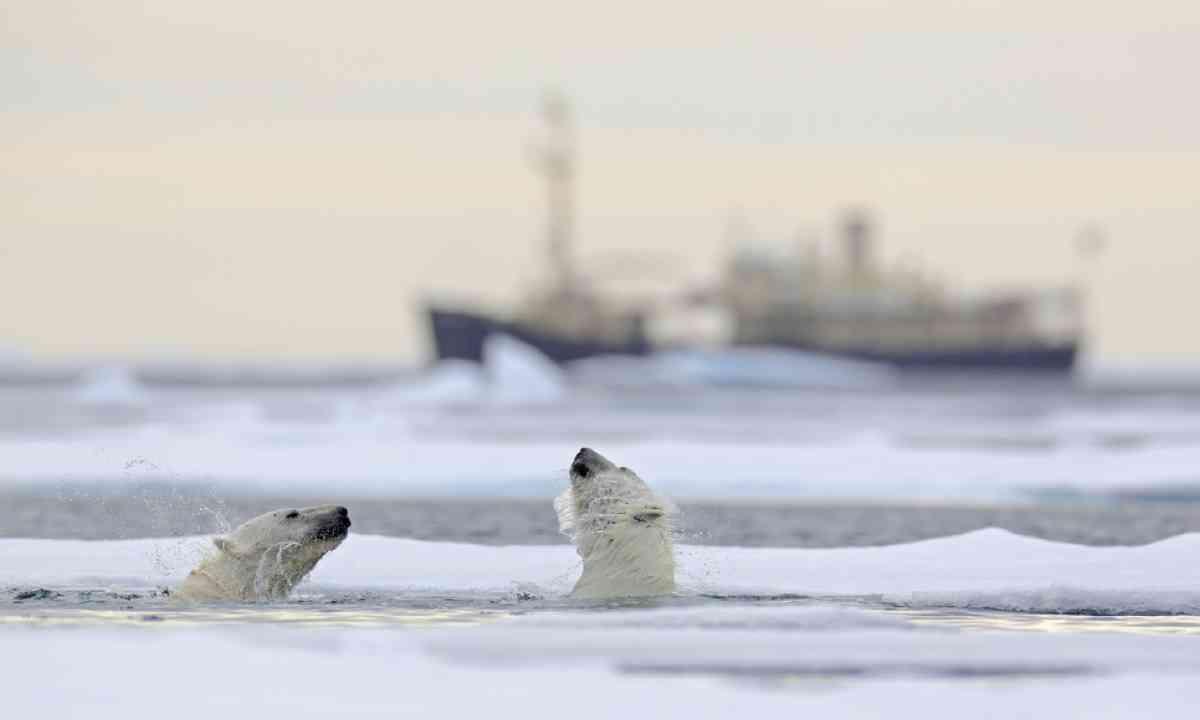 Polar bears in Svalbard, Norway (Shutterstock)