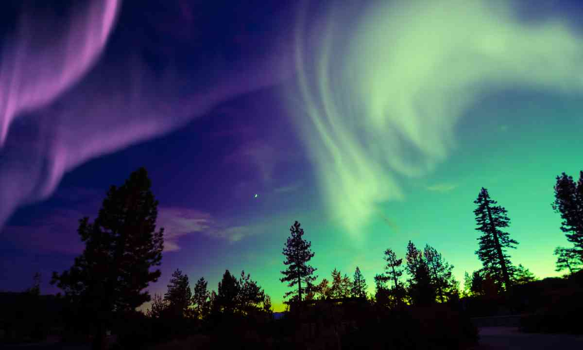 Northern Lights over trees (Shutterstock)