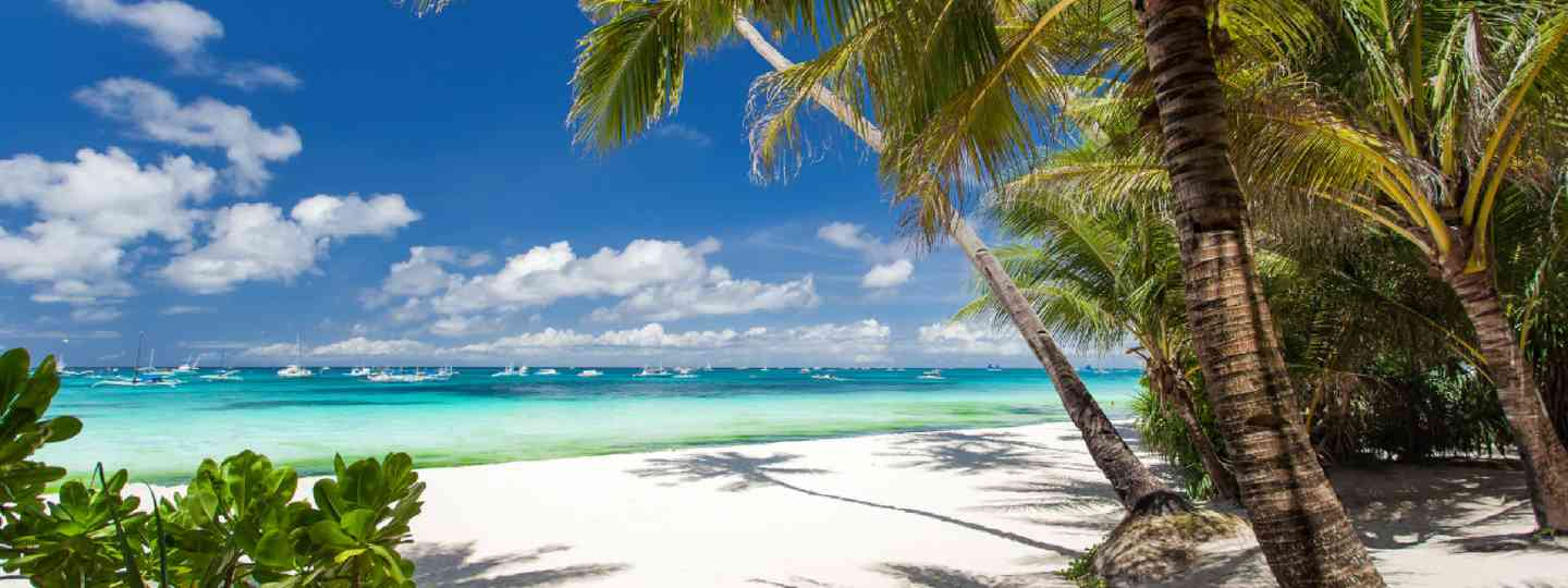 Tropical beach with palm and white sand, Philippines (Shutterstock: see credit below)