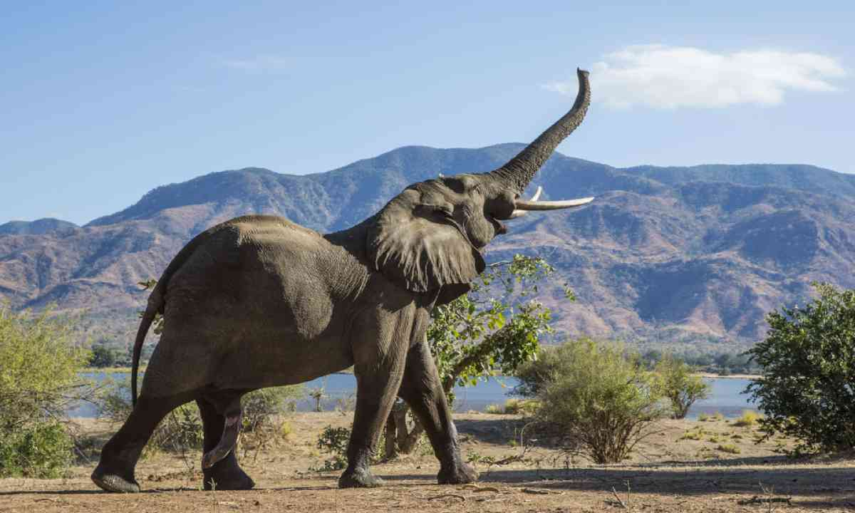 Elephant and mountain (Shutterstock)