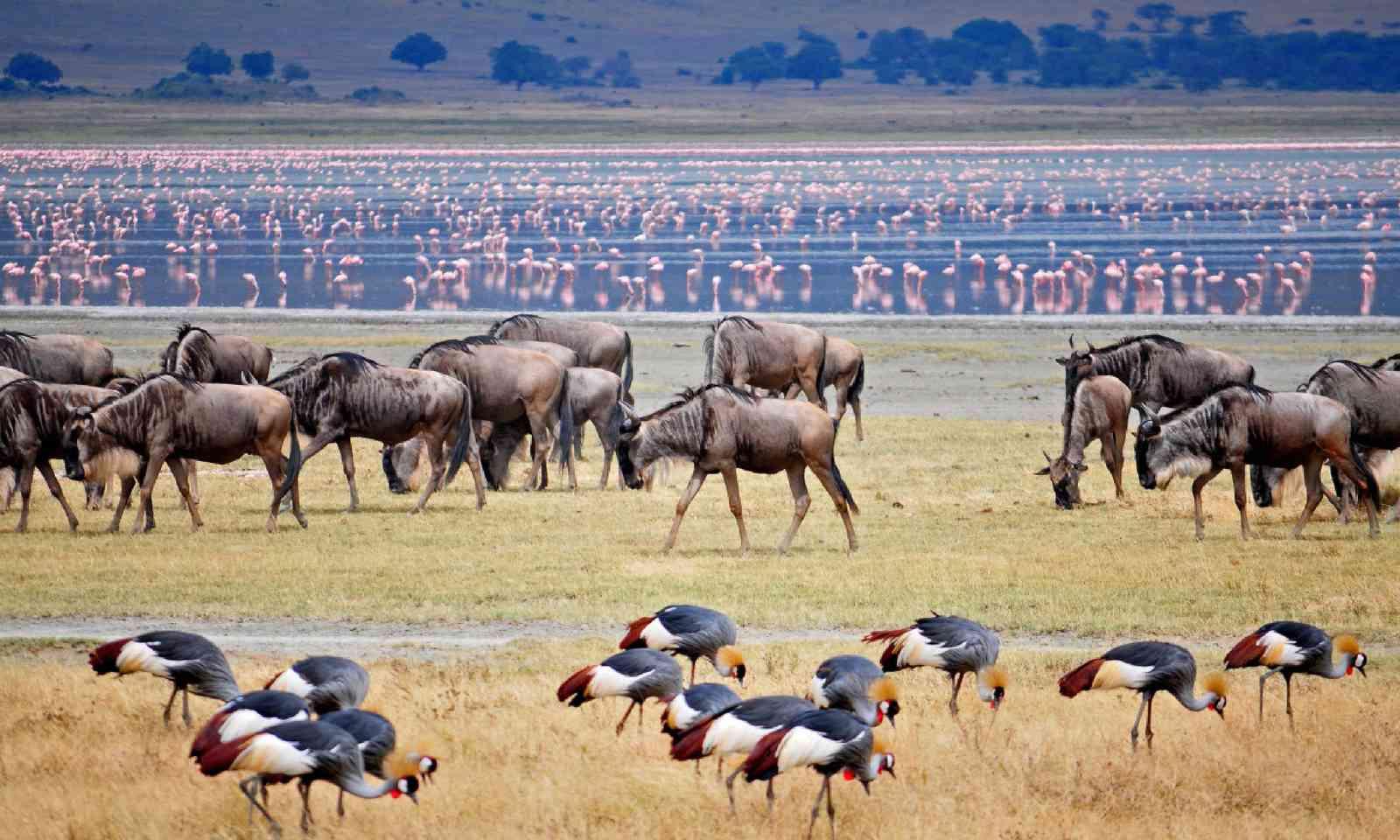 Wildebeest migration (Shutterstock)