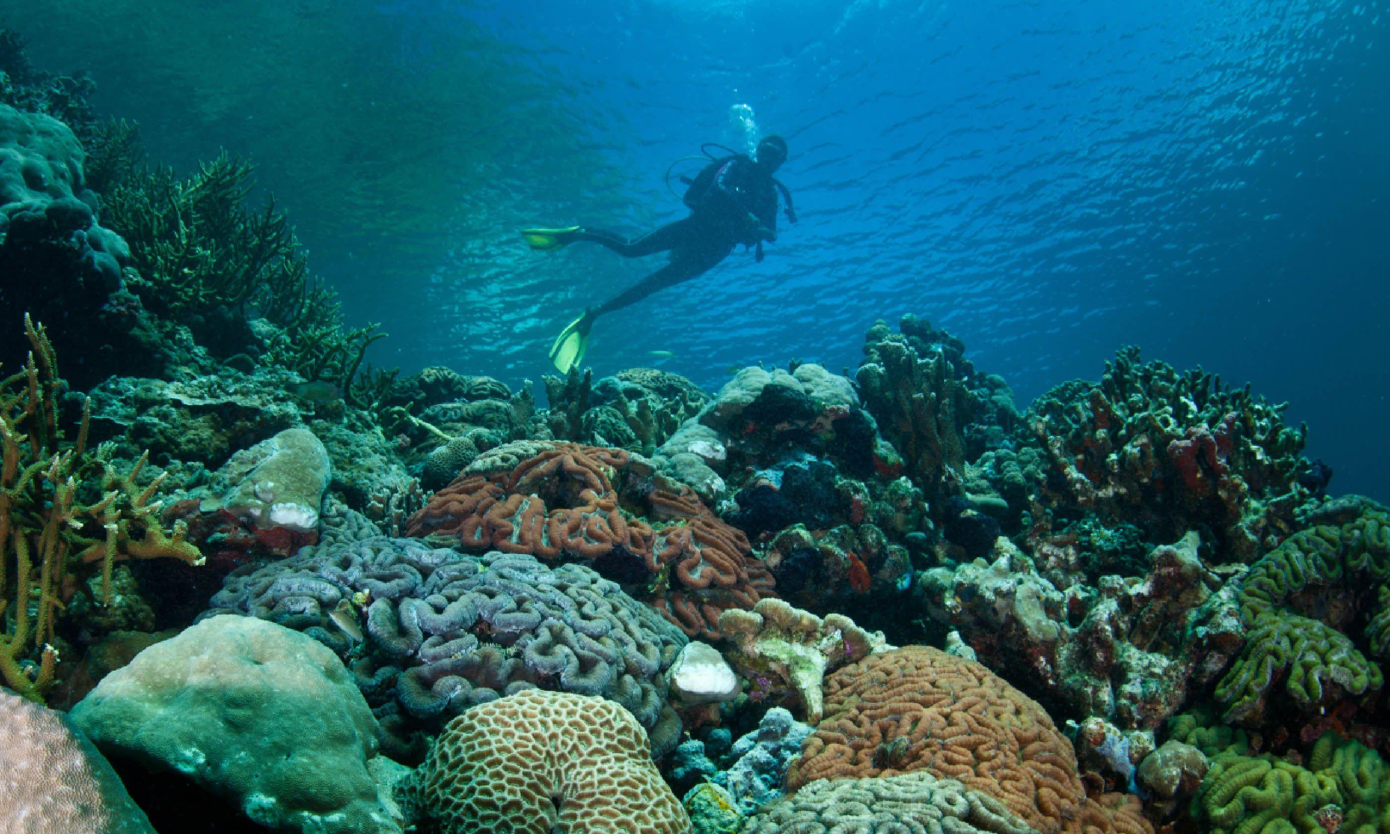 Diver exploring Palau (Shutterstock)
