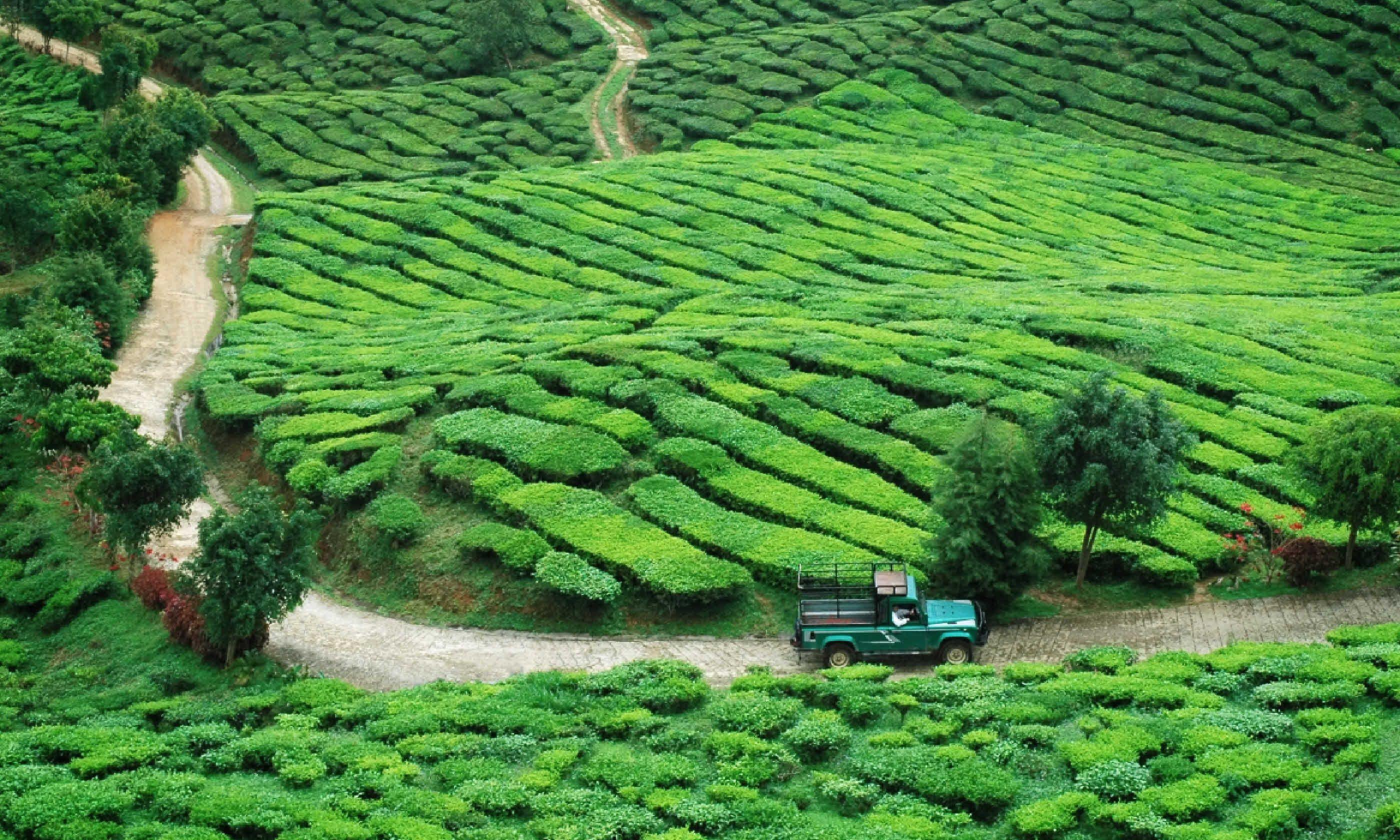 Jeep drive to plantation, Malaysia (Shutterstock)