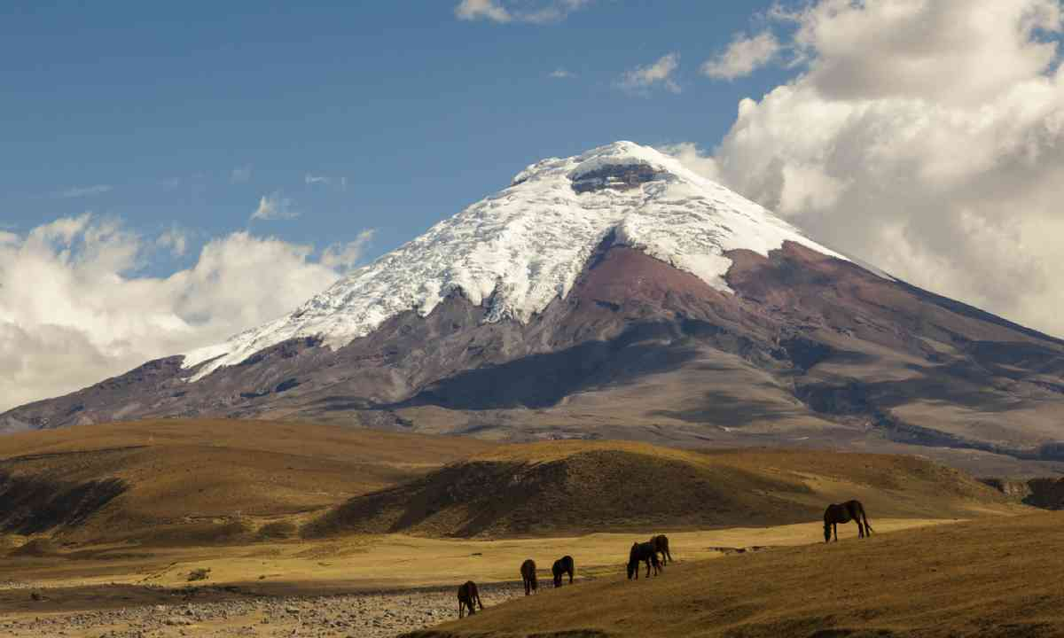 Cotopaxi volcano and wild horses (Shutterstock)