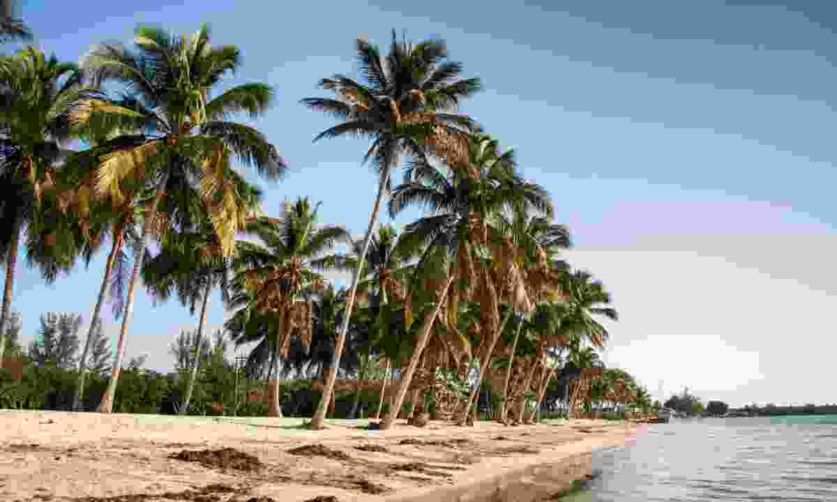 Playa Larga beach, Bay of Pigs (Shutterstock)