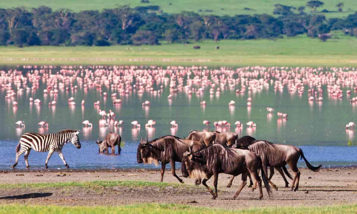 Ngorongoro Crater, Tanzania (Shutterstock)