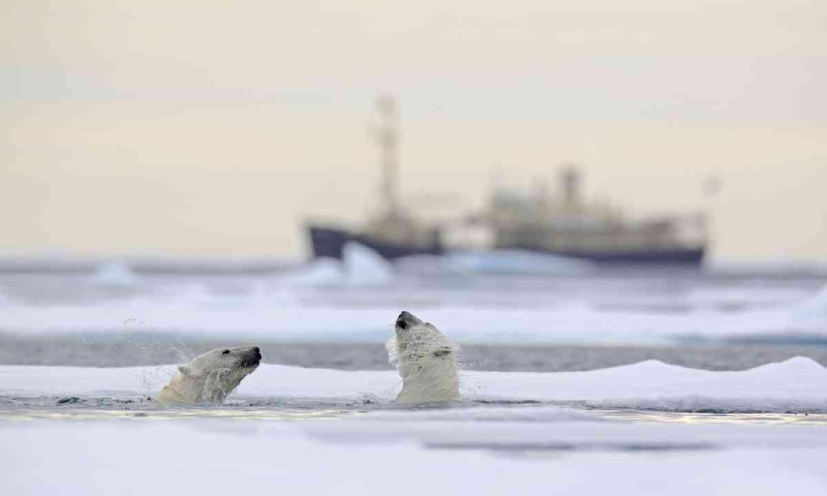 Polar bears, Svalbard (Shutterstock)