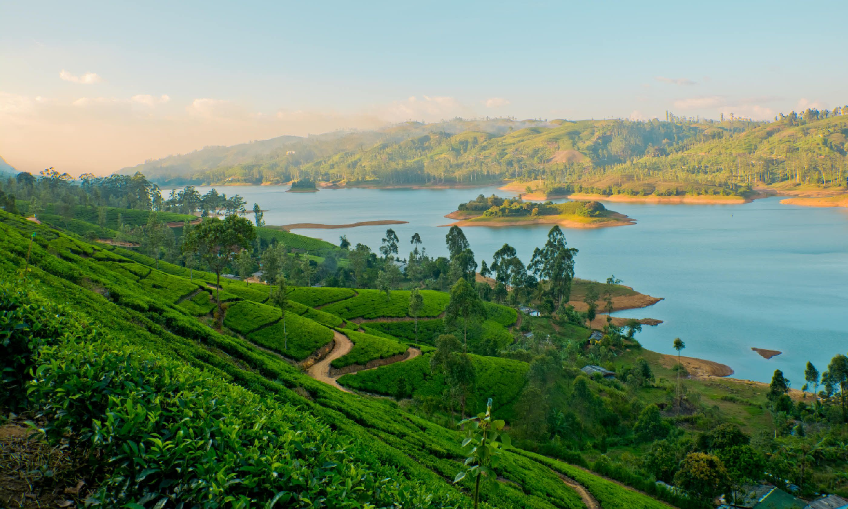 Tea estates in Sri Lanka (Shutterstock)
