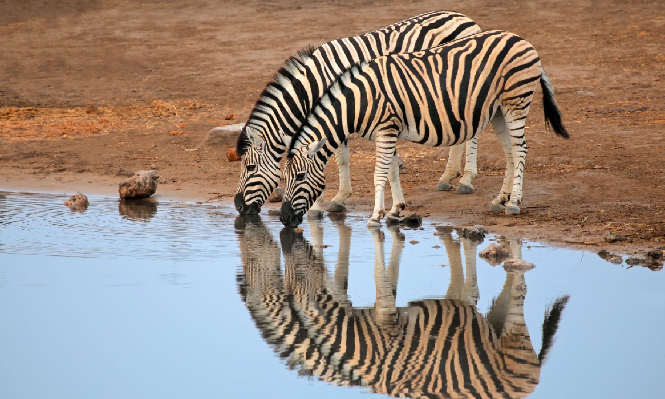 Etosha National Park, Namibia (Shutterstock)