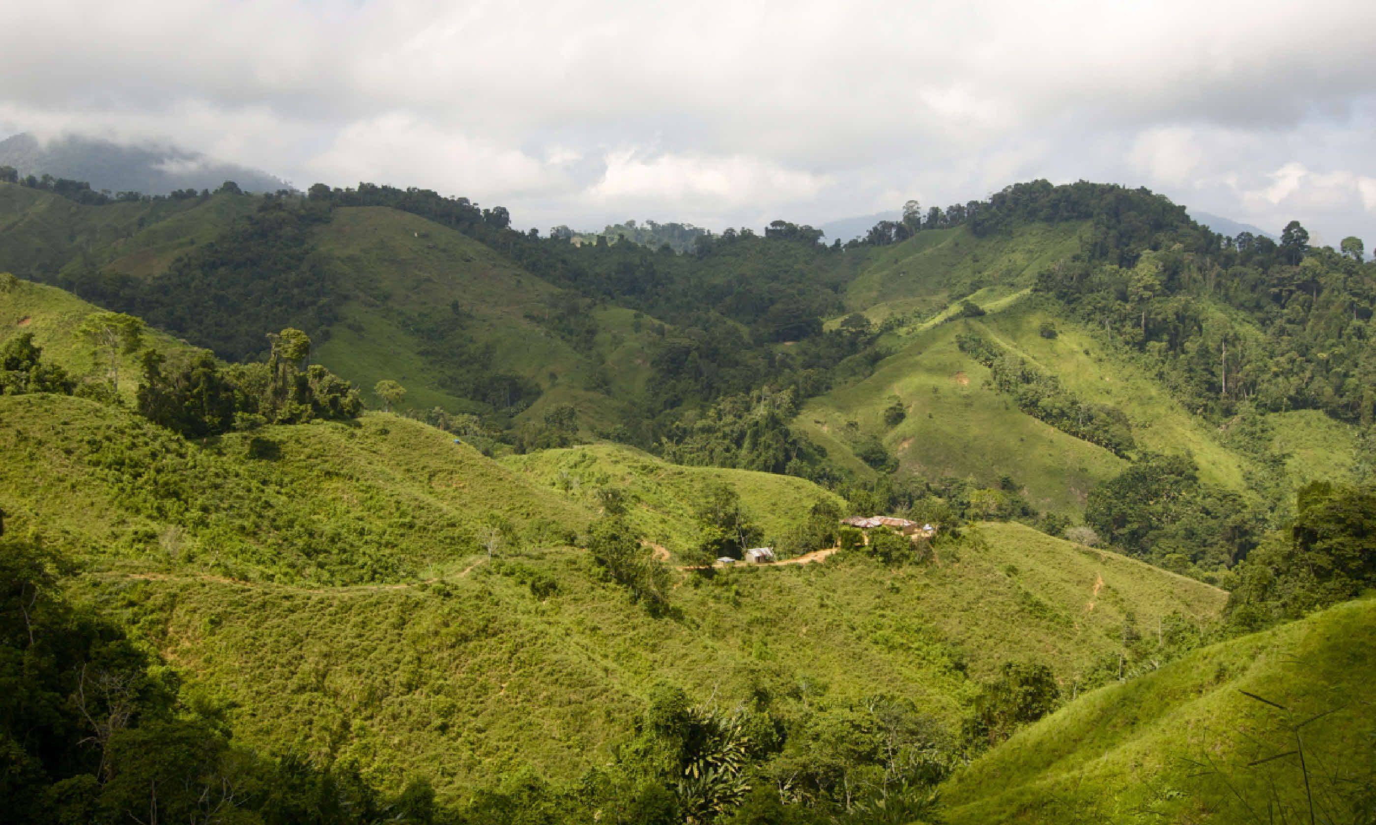 Trekking through the jungle in Colombia (Shutterstock)