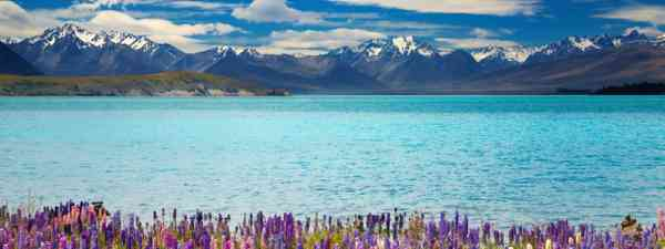 Lake Tekapo, South Island, New Zealand (Shutterstock: see credit below)