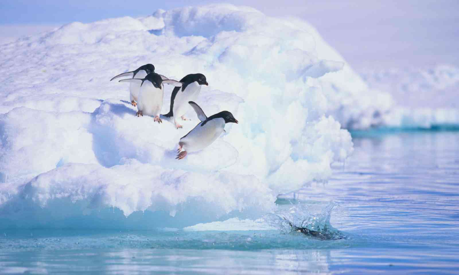 Adelie penguins (Shutterstock)