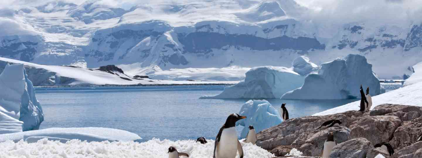 Group of penguins in Antarctica (Shutterstock: see credit below)