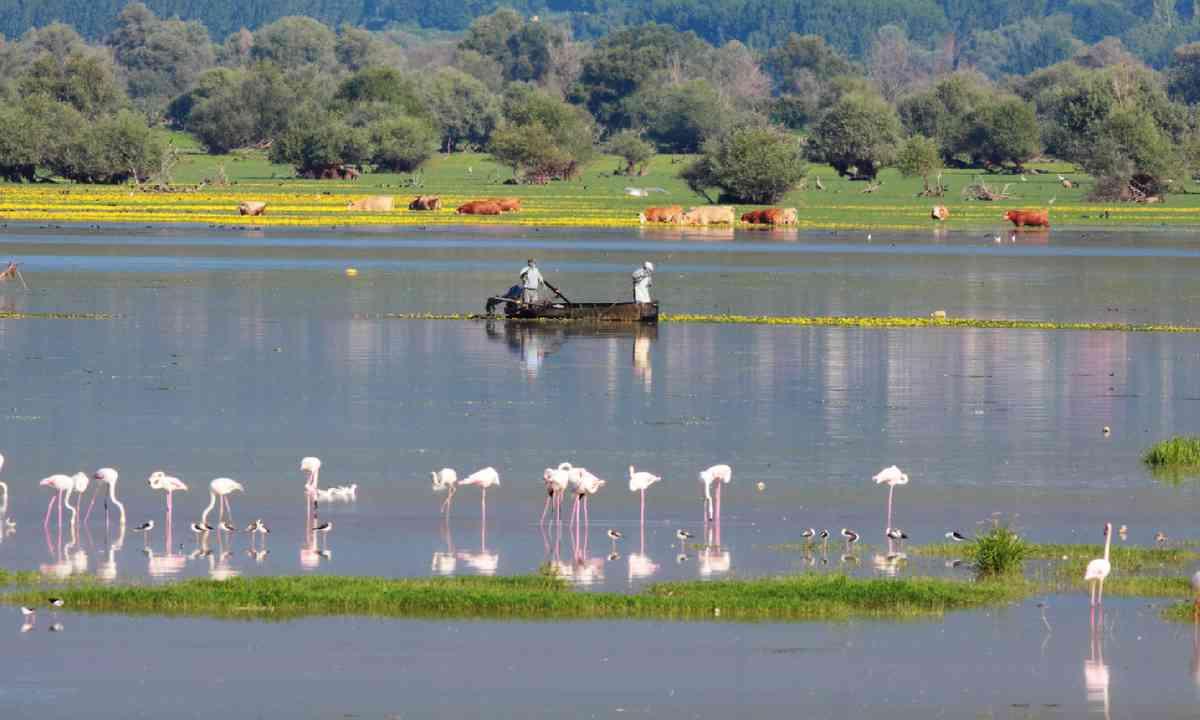 Lake Kerkini (Photo: S. Mountzelos)