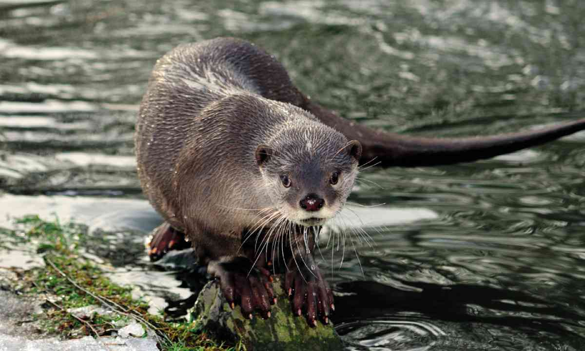 Otter (Photo: Delta Management Body for Nestos)