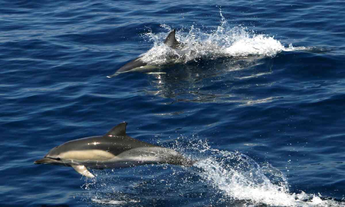 Dolphins (Photo: Municipality of Alonissos)