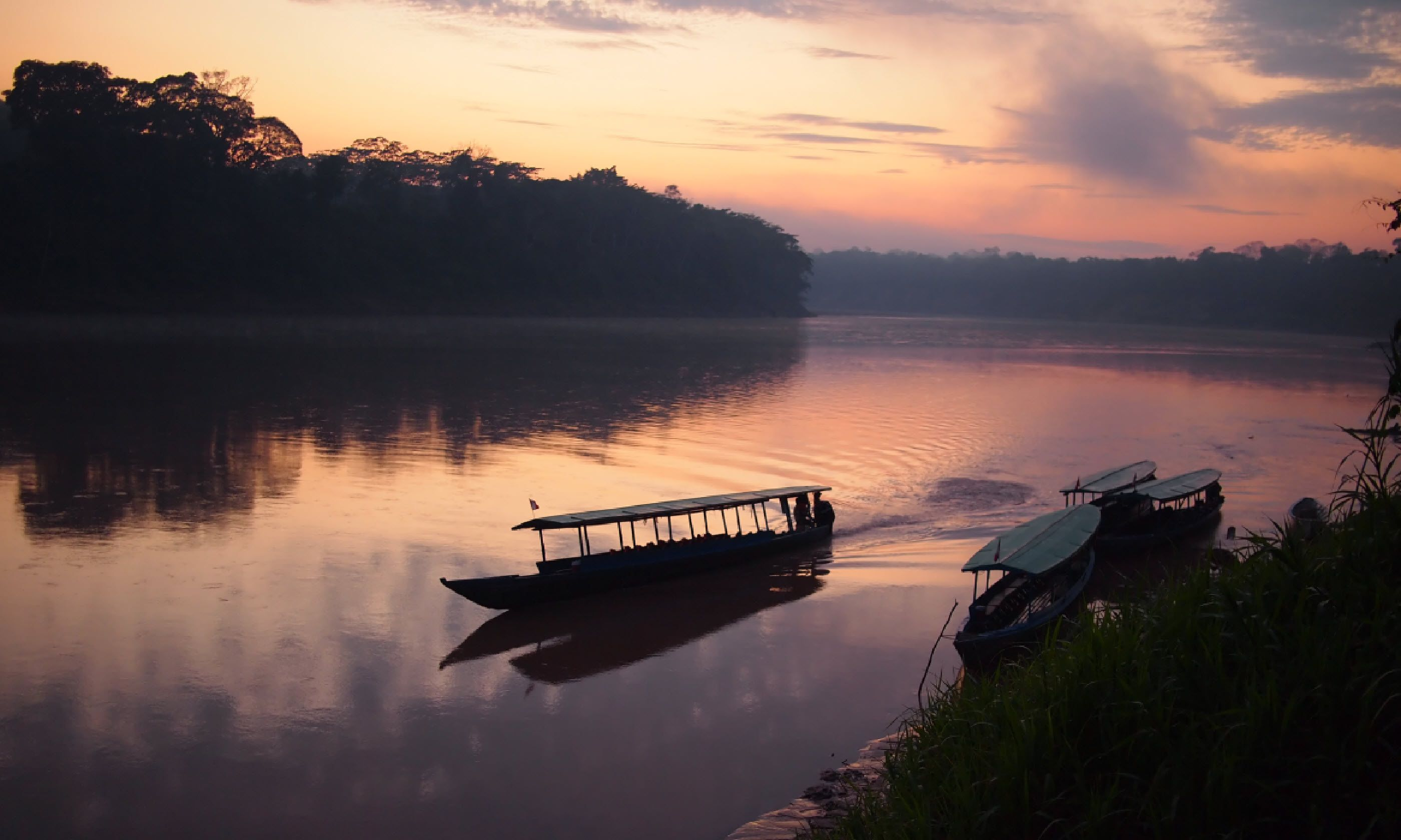Amazon rainforest in eastern Peru (Shutterstock)