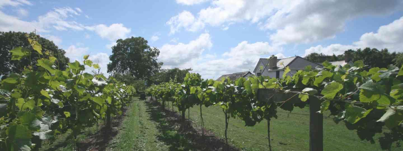 Jabajak vineyard (All images supplied by vineyards)