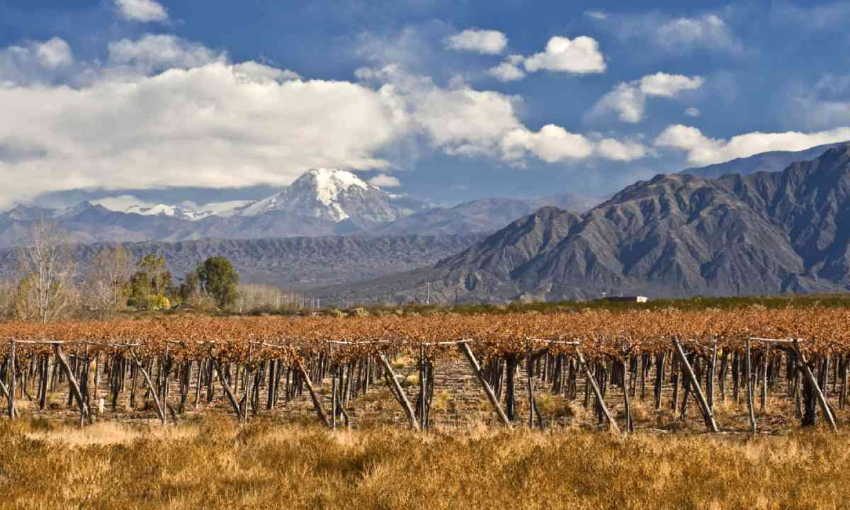 Volcano Aconcagua and vines at a vineyard, Argentina (Shutterstock)
