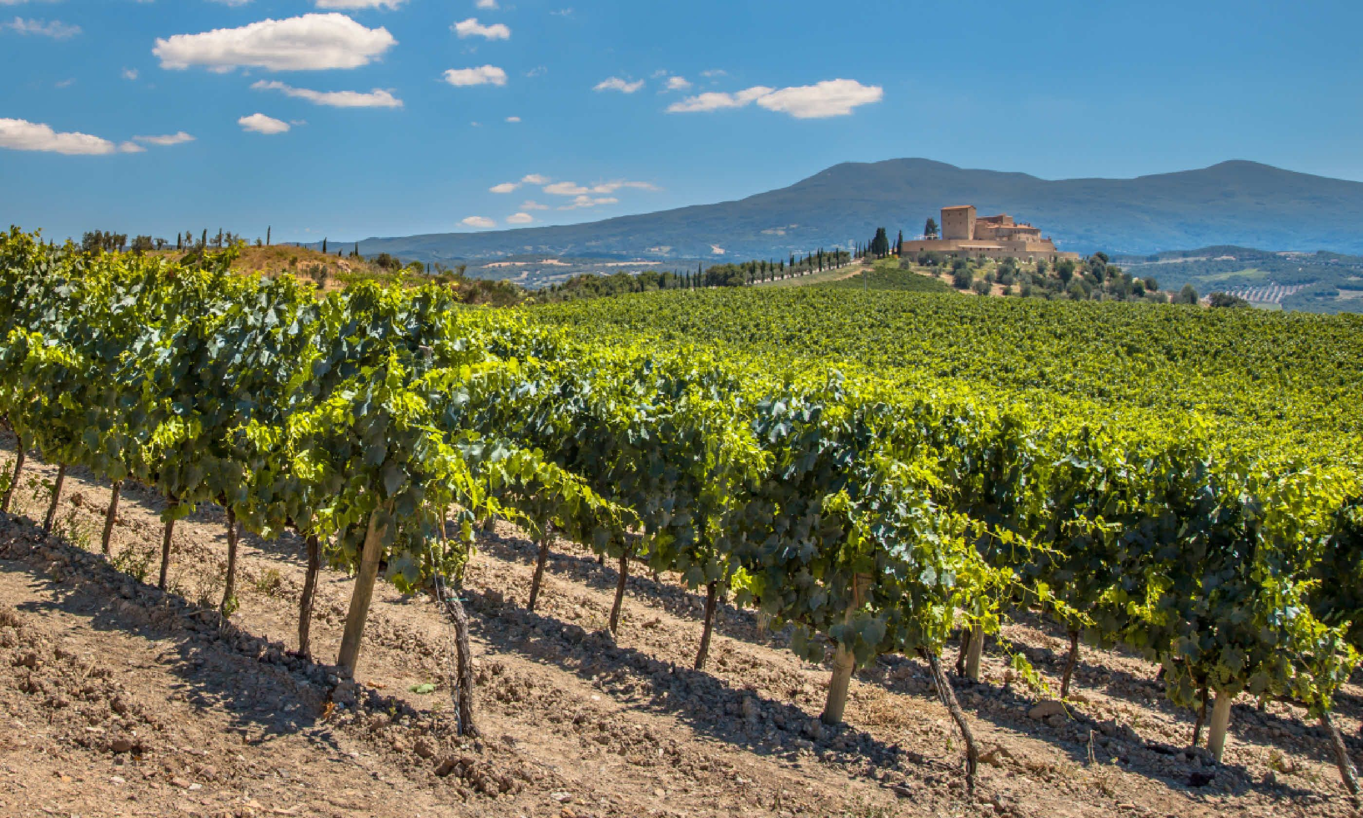 Chianti vineyard (Shutterstock)