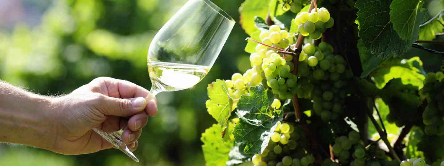 Glass of Riesling (Shutterstock: see credit below)