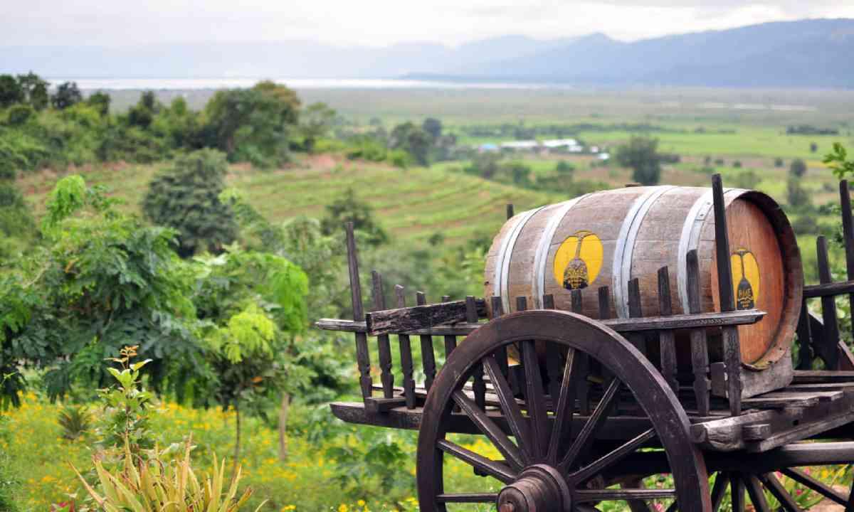 Vineyard in Inle Lake (Shutterstock)