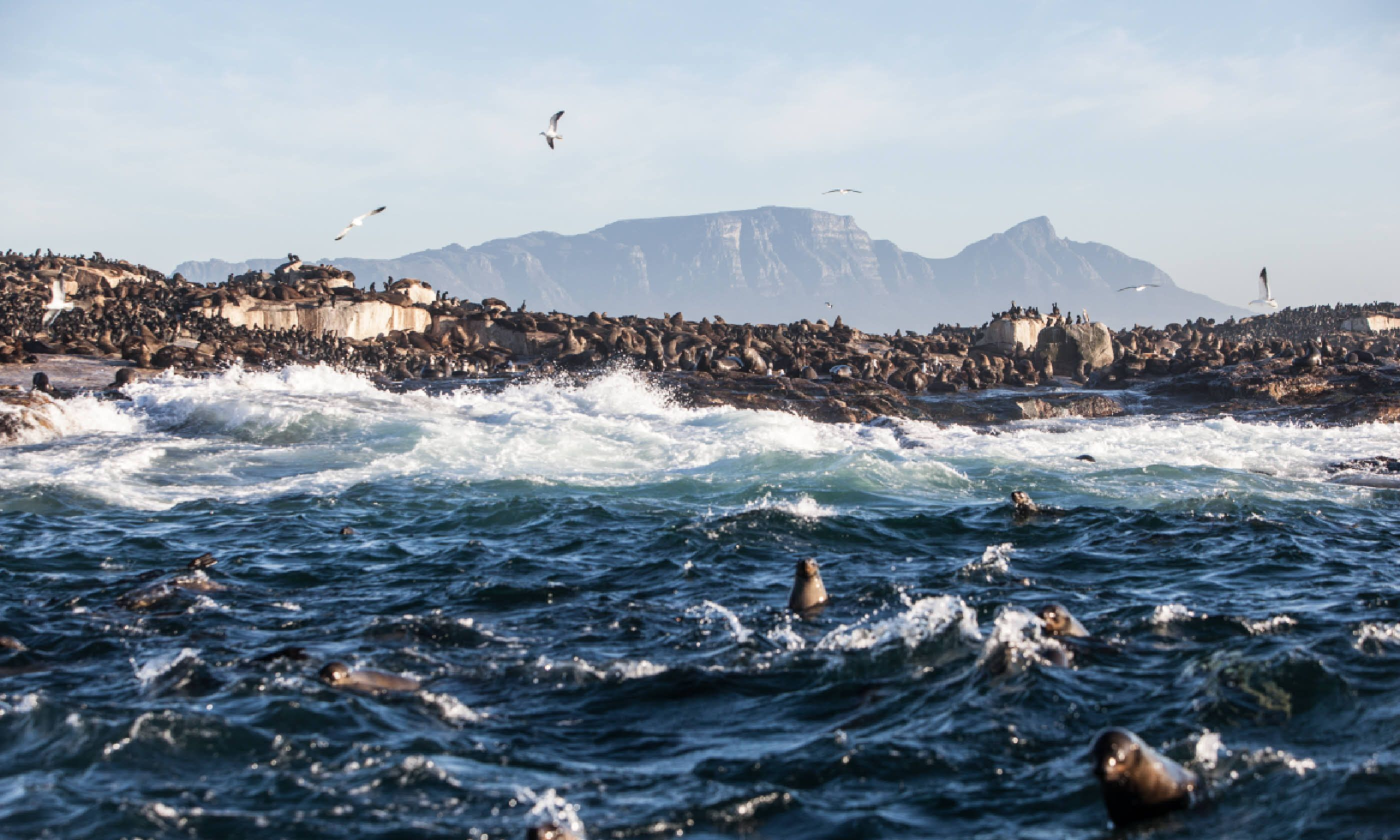 Cape fur seals on Seal Island (Shutterstock)