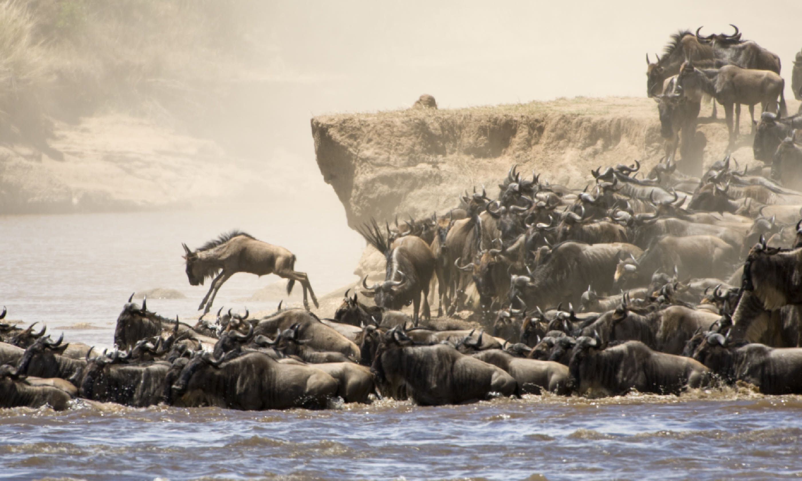 River crossing on the Great Migration, Masai Mara (Shutterstock)