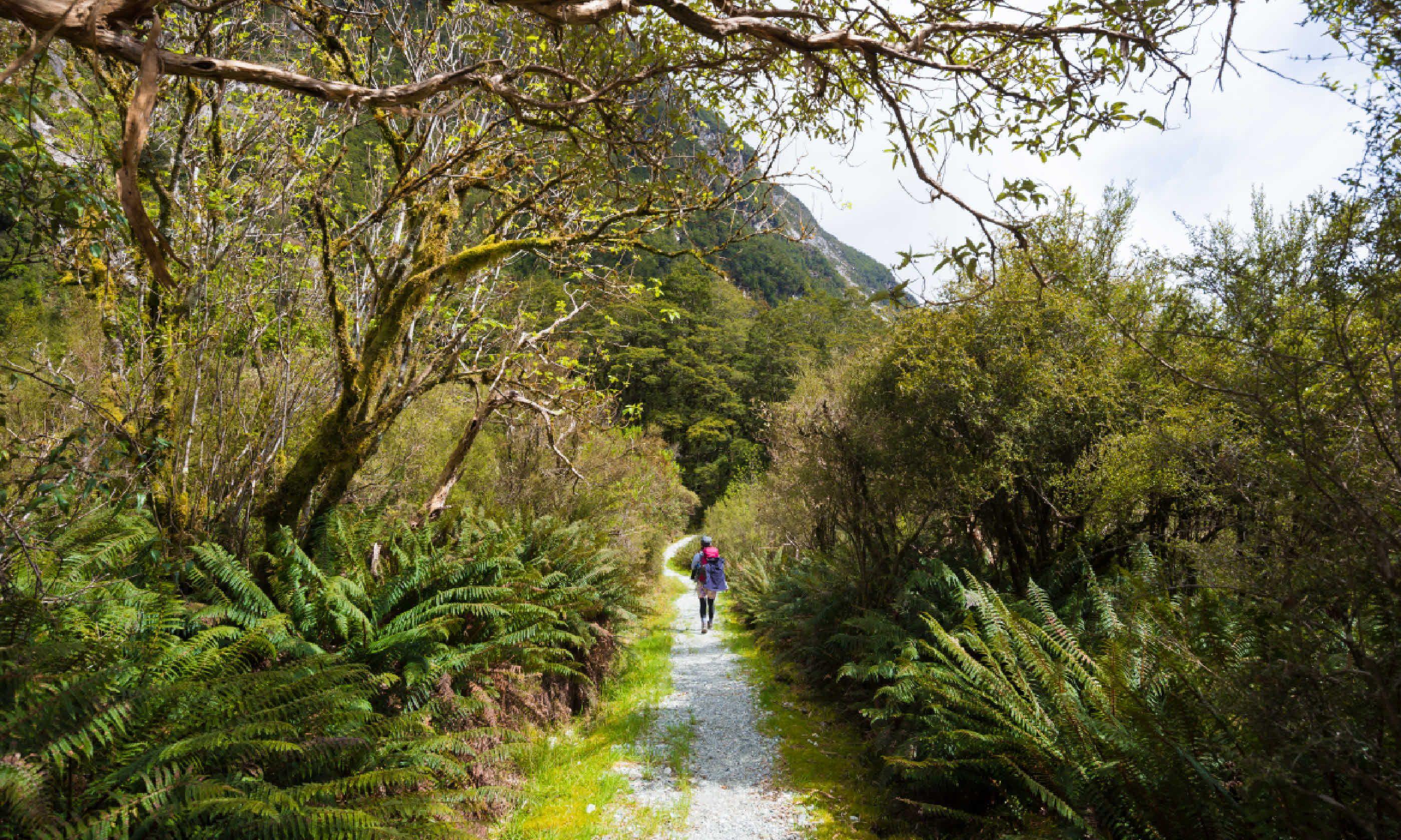 Milford Track (Shutterstock)