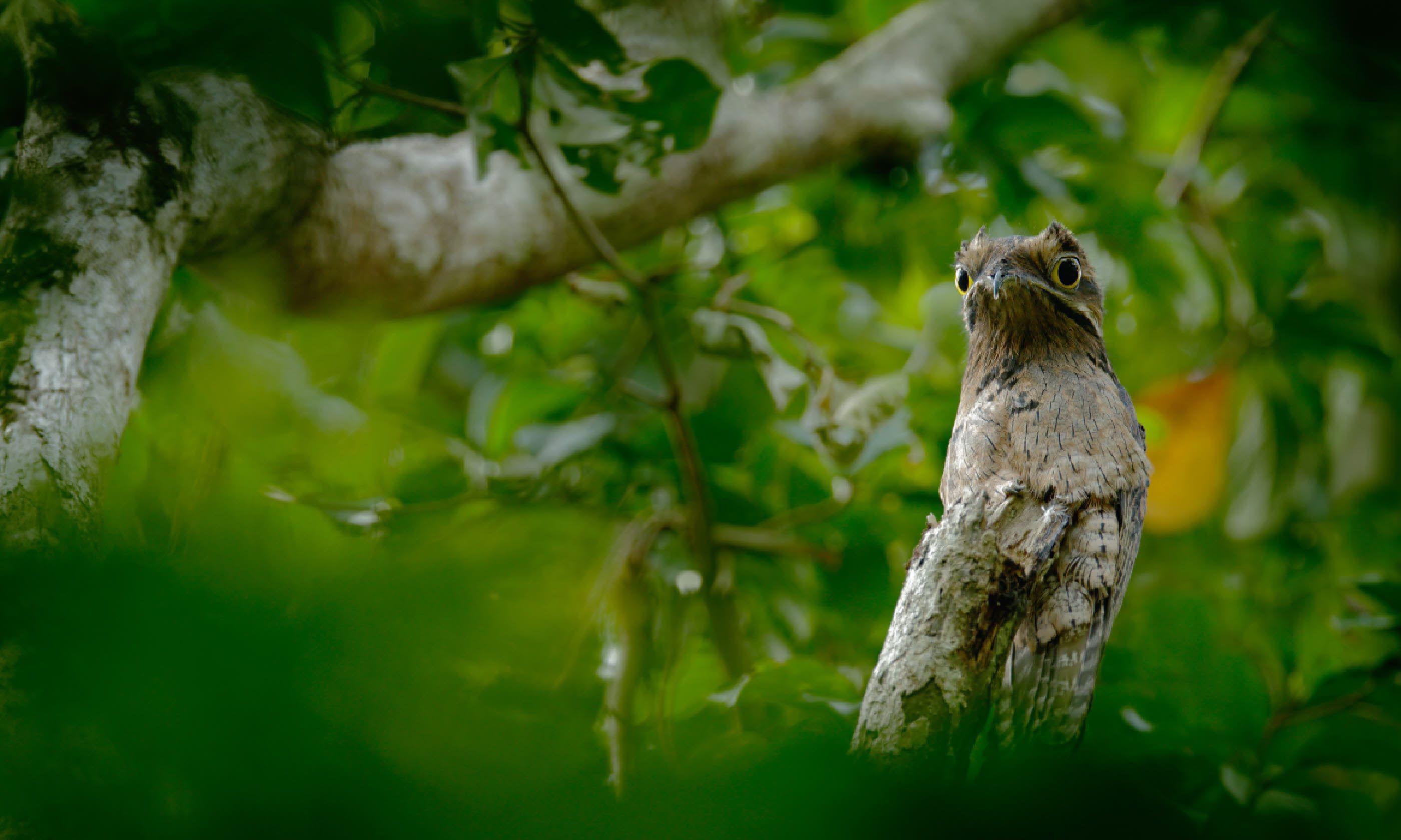 Asa Wright Nature Centre, Trinidad (Shutterstock)