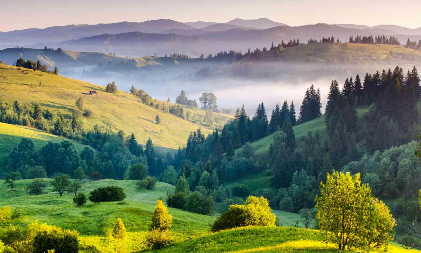 Carpathian, Ukraine (Shutterstock)
