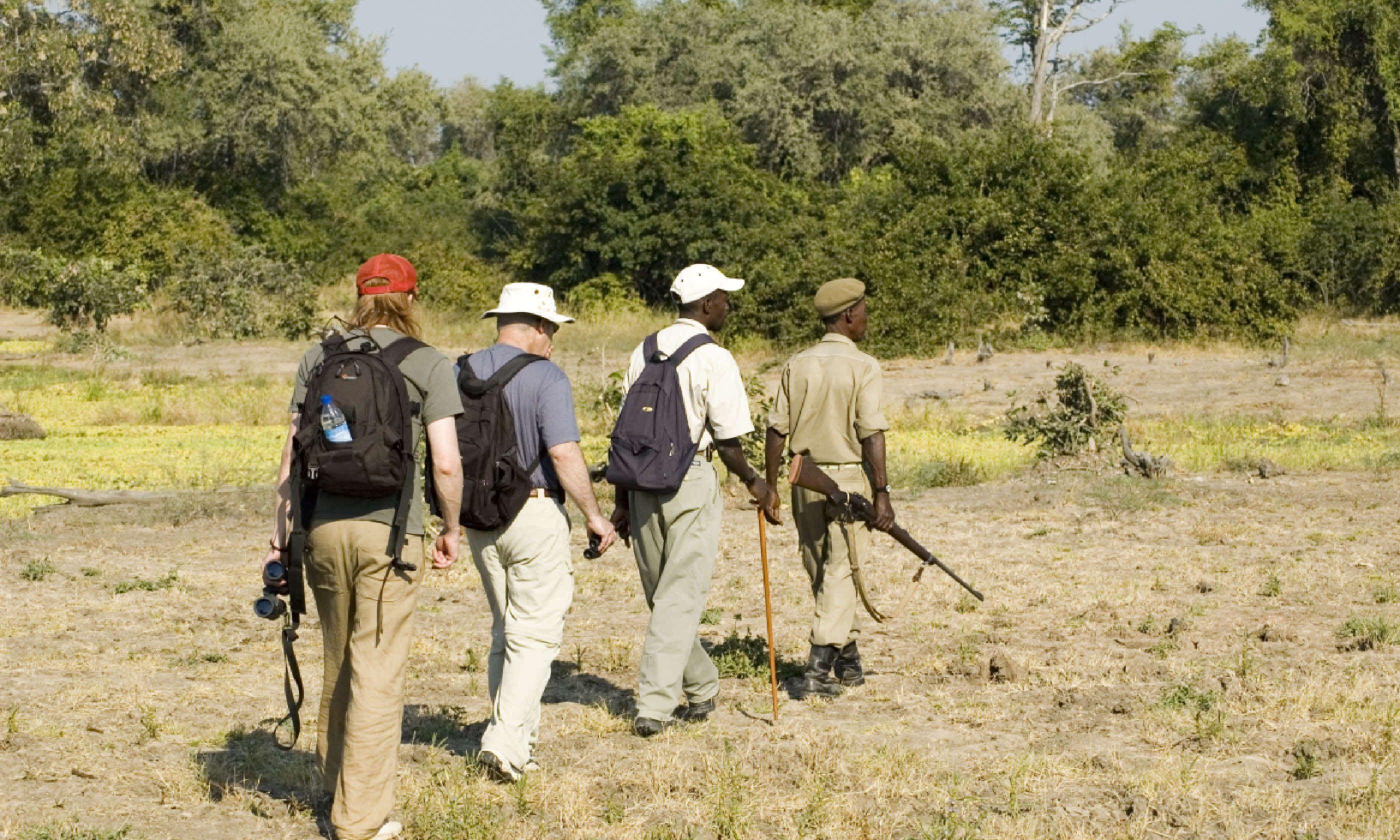 Walking safari in South Luangwa National Park (Shutterstock)