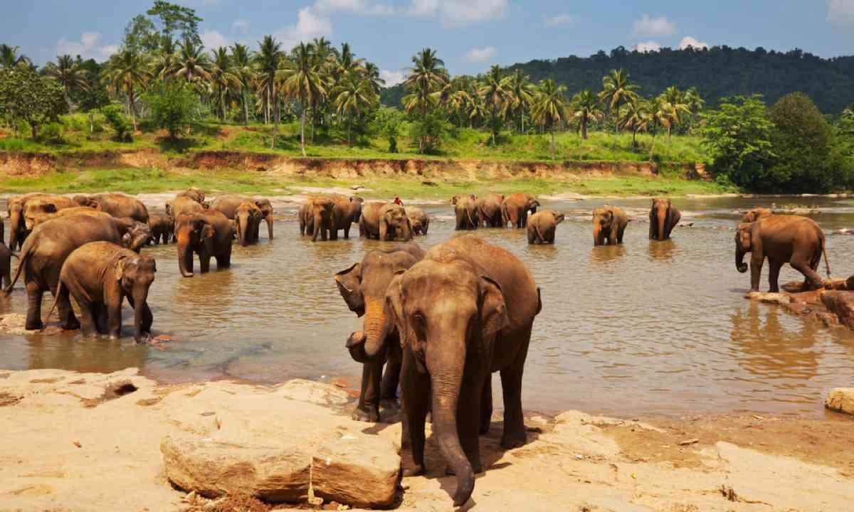 Elephants in Sri Lanka (Shutterstock)