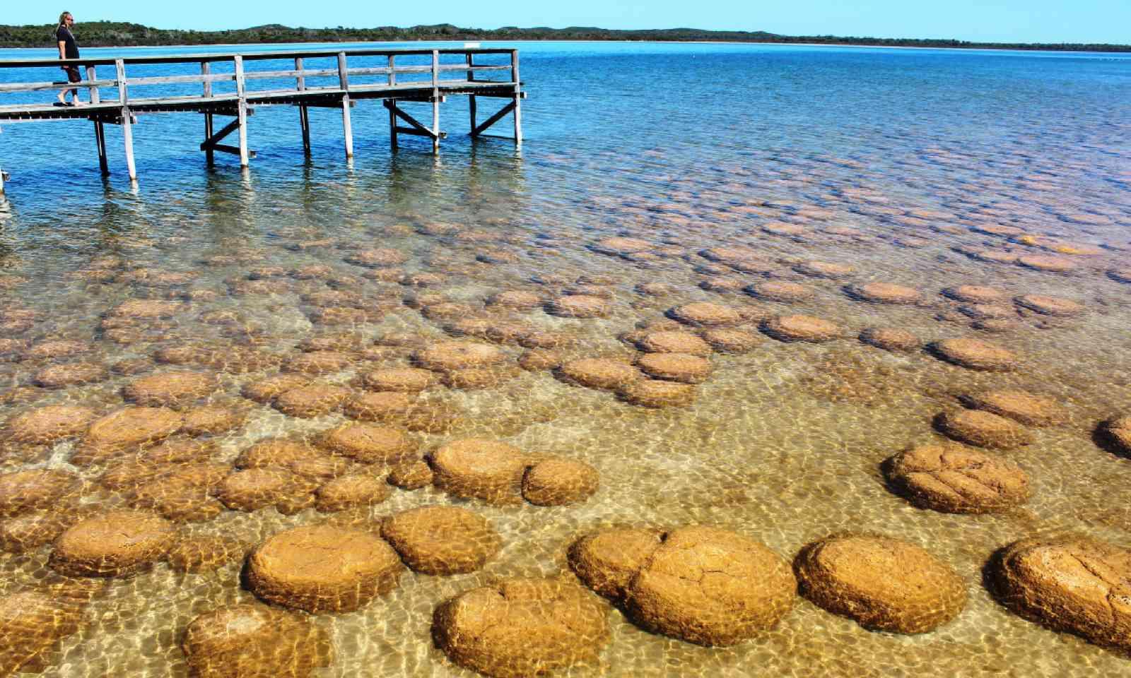 Lake Clifton (Shutterstock)