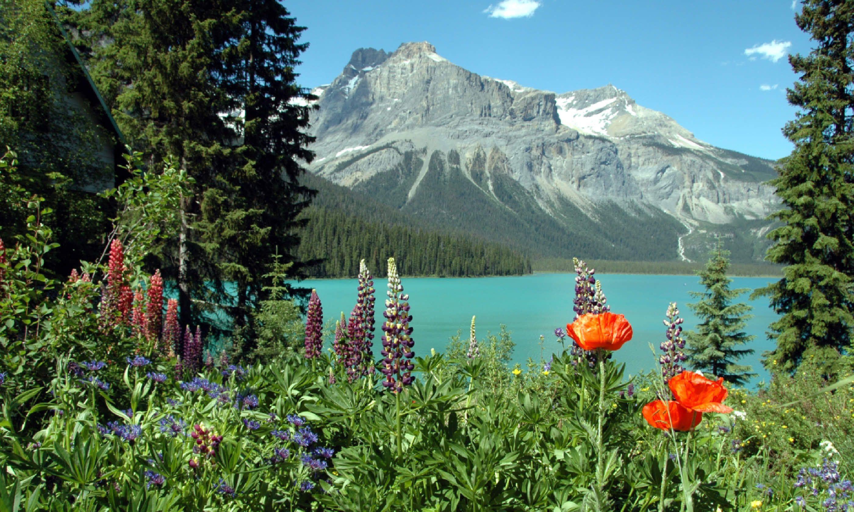 Flowers bordering Emerald Lake, BC (Shutterstock)
