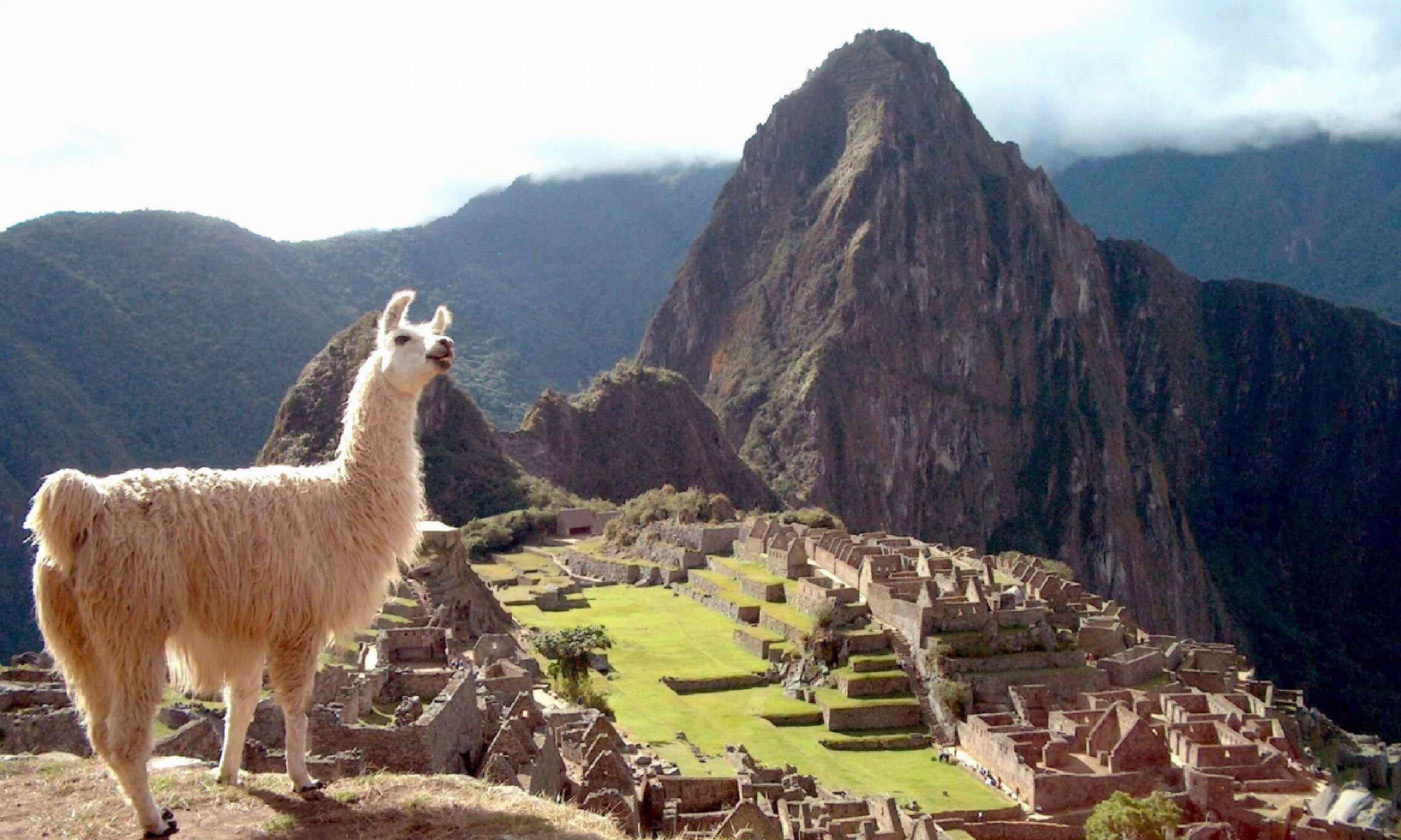 Llama at Machu Picchu (Shutterstock)